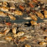 What Makes a Home At Risk for Termites?