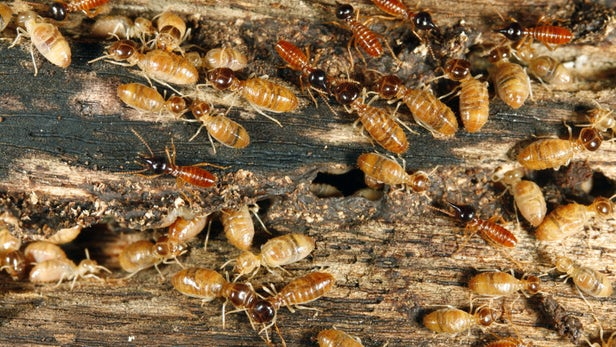 Home At Risk for Termites